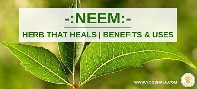Benefits-and-uses-of-neem